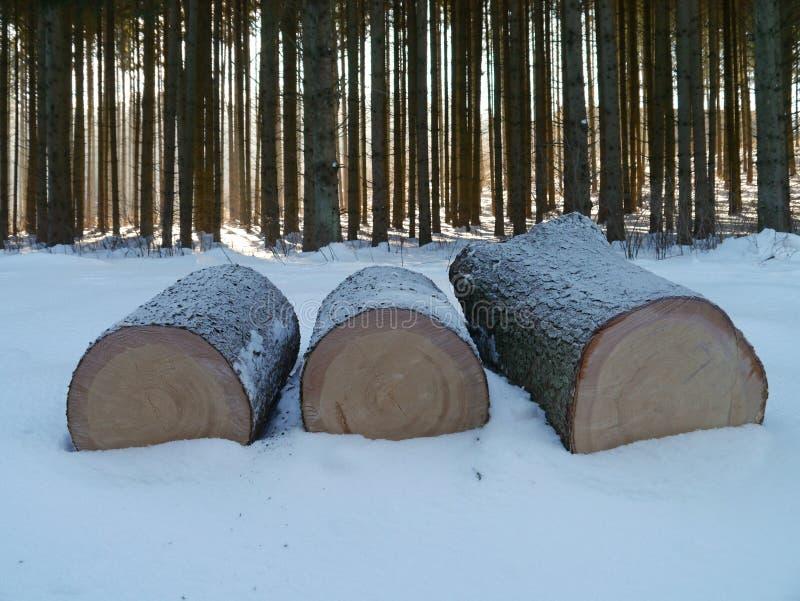 Prydlig stam i snöig trä royaltyfria foton