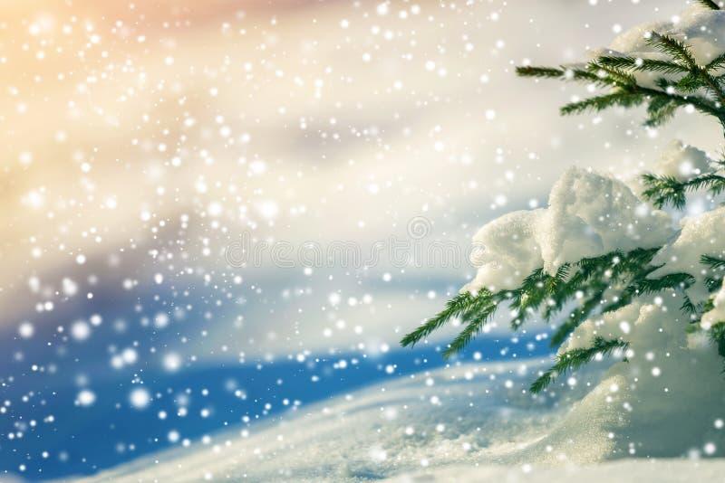 Prydlig tr?dfilial med gr?na visare som t?ckas med djup sn? och rimfrost, och stora sn?flingor p? suddig bl? f?rgrik kopia fotografering för bildbyråer