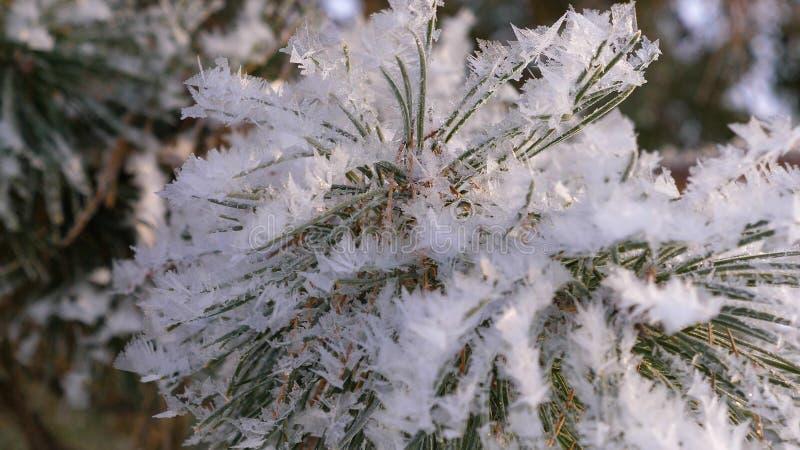 Prydliga filialer som täckas med frost i vinterskognärbilden royaltyfria bilder