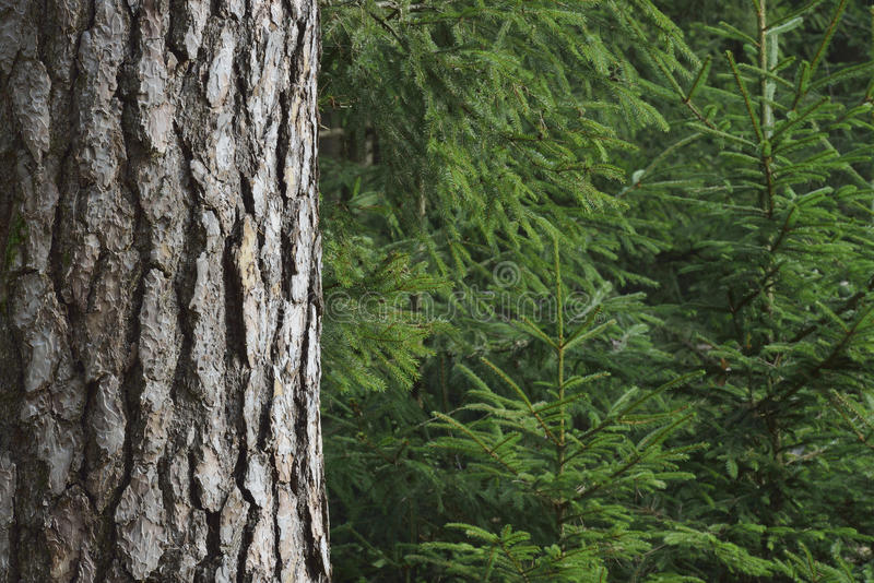 Prydliga träd royaltyfri foto