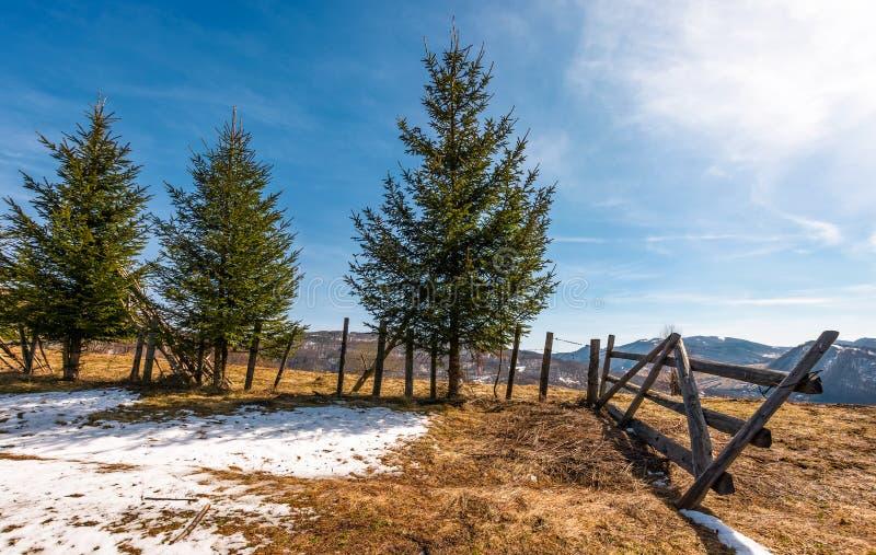 Prydliga träd nära staketet på backen royaltyfria foton
