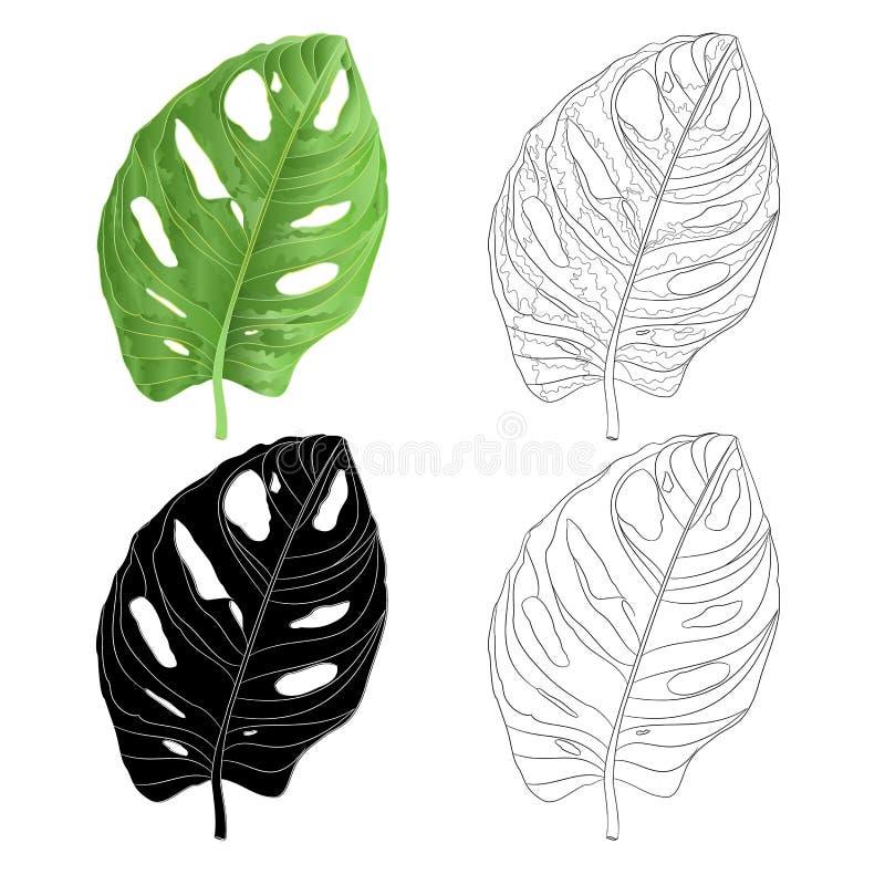 Prześcieradło Monstera deliciosa tropikalnej rośliny naturalna sylwetka i kontur odizolowywający na białej tło akwareli botaniczn ilustracji