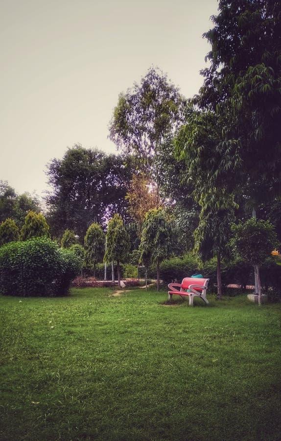 Prześwietny parkowy widok zdjęcia royalty free
