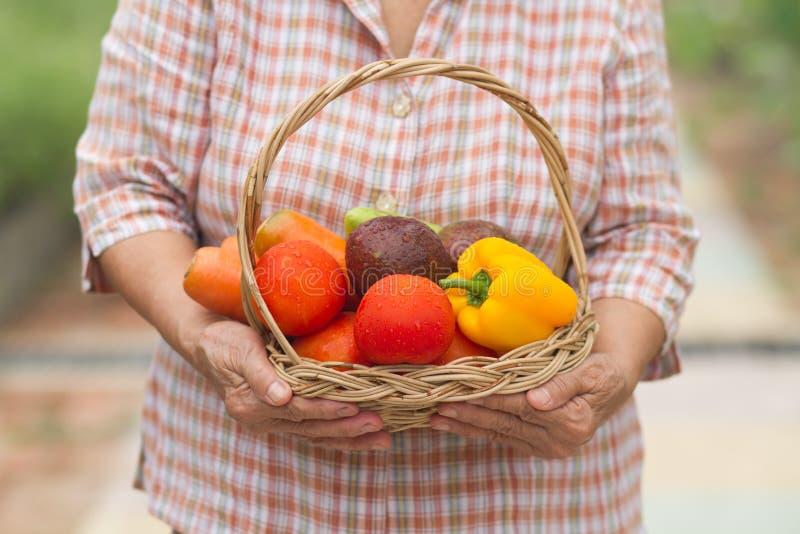 Przechodzić na emeryturę starsza kobieta trzyma świeżego warzywa i owoc w koszu który zbiera od jej ogrodnictwa zdjęcia stock