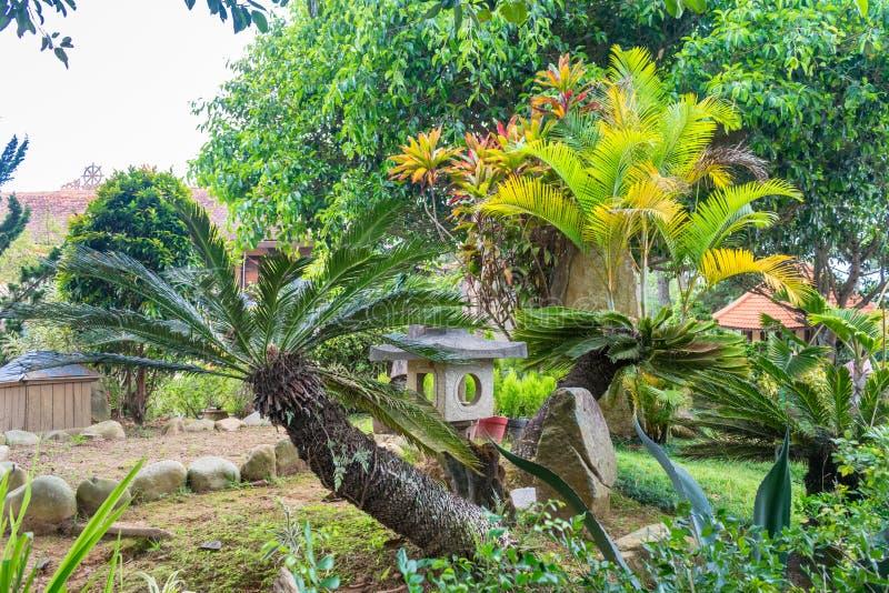 Przechylająca palma z kamiennym zabytkiem w parku w Wietnam obraz royalty free