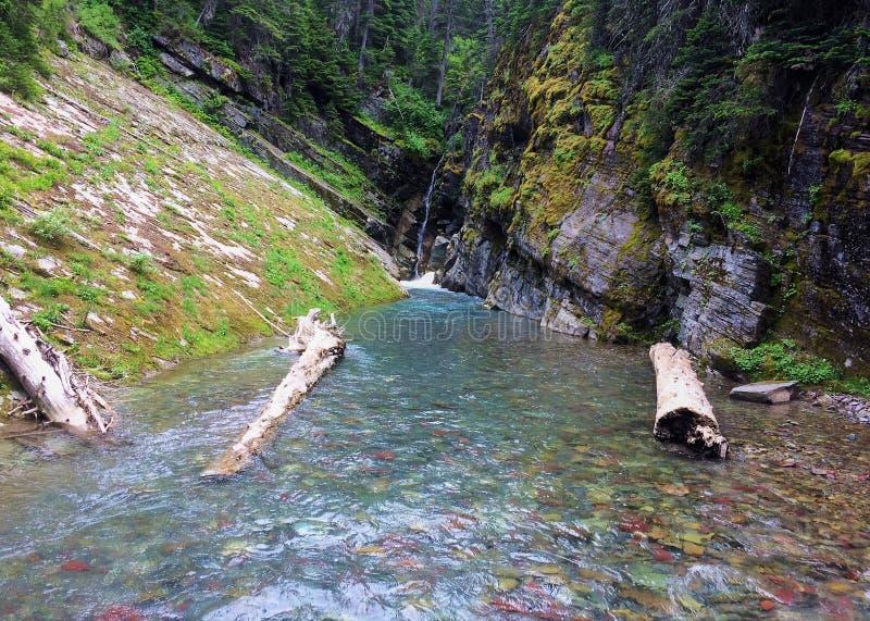 Przechylający łóżka w rzekę w lodowa parku narodowym fotografia stock