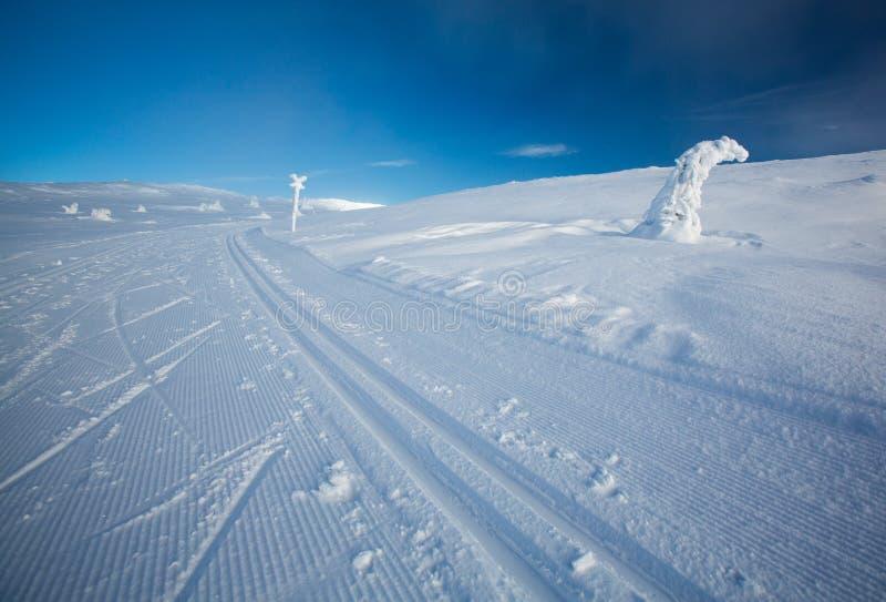 Przecinającego kraju narciarstwa ślada obraz royalty free