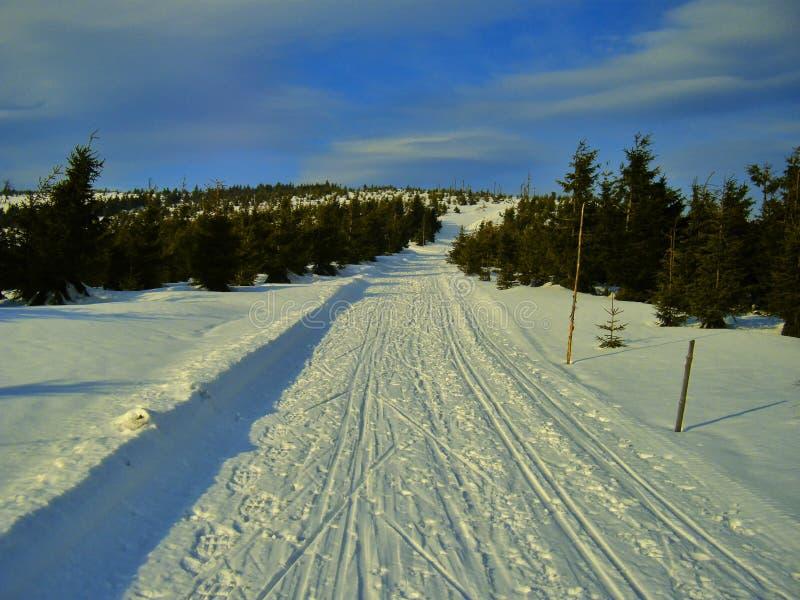 Przecinającego kraju narty ślad w halnym lesie przy zimy światłem dziennym fotografia stock
