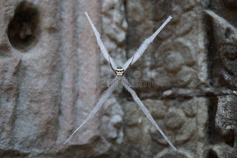 Przecinający pająk zdjęcia royalty free