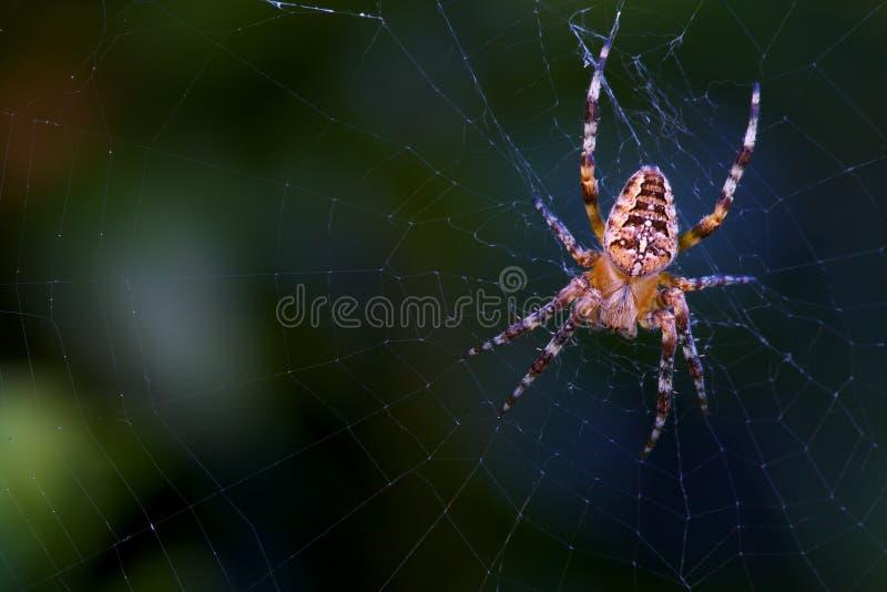 Przecinający pająk na spiderweb zdjęcie royalty free