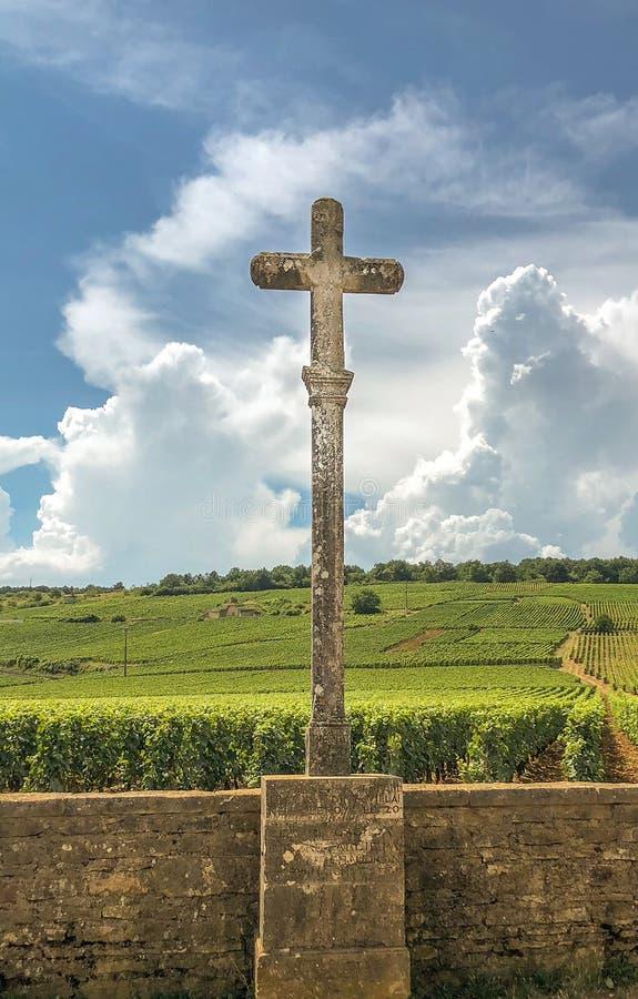 Przecinający przegapia winnica w Burgundy obrazy stock