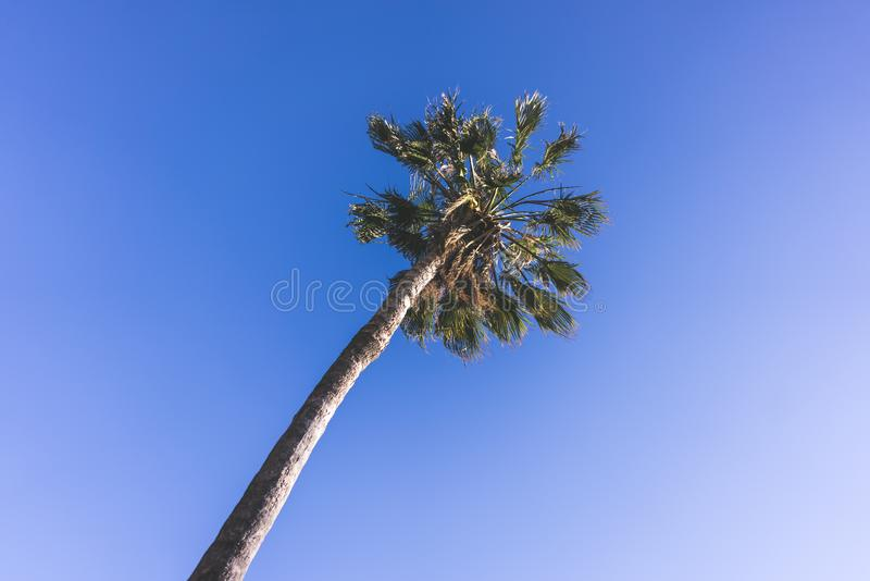 przeciw błękitny palmowemu niebu kalifornijskie dreamin obraz stock