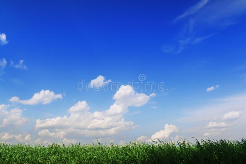 przeciw błękitny trawy zieleni bogatemu nieba lampasowi obrazy royalty free
