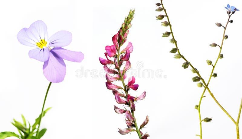 przeciw biały różnym tło roślinom obrazy stock