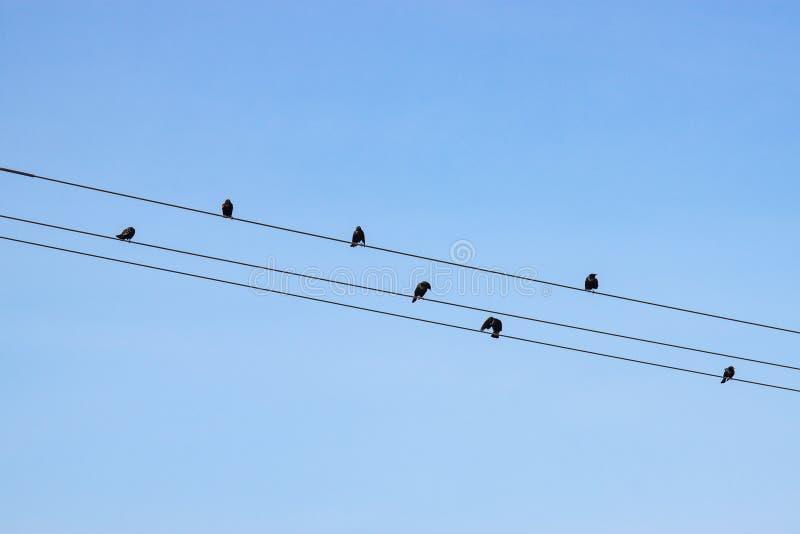 przeciw drutów ptaków błękitny filmującym nieba drutom obraz stock