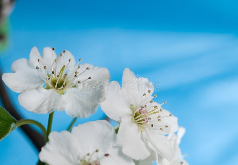 przeciw kwiatowi kwitnie bonkrety błękitny niebo obraz stock