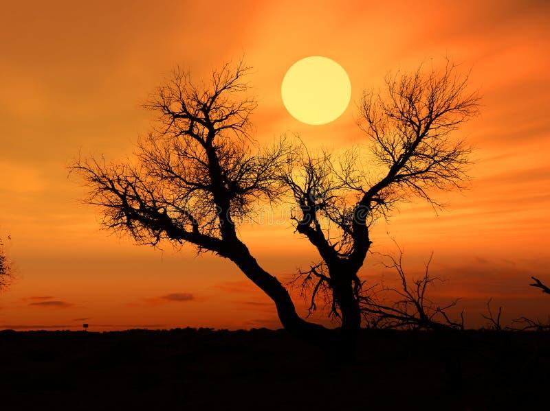 przeciw nadmiernemu nieba światła słonecznego drzewu obraz stock