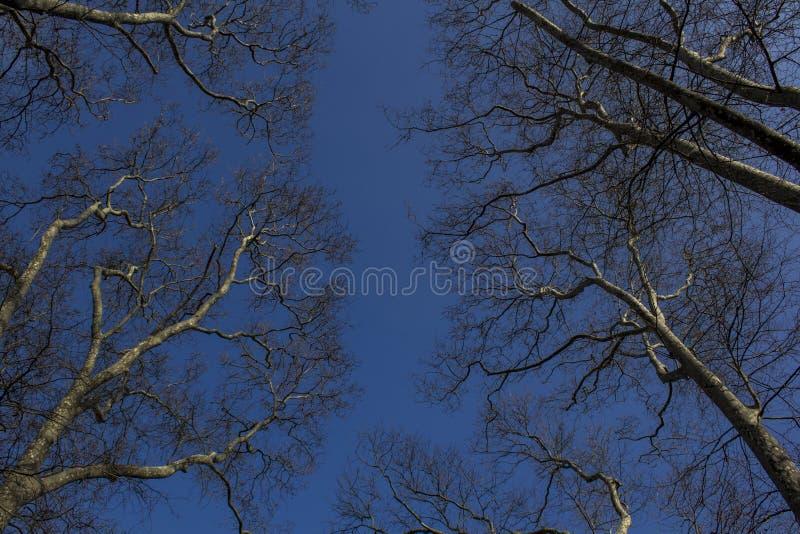 przeciw nieb drzewom Strzelający w górę perspektywy zdjęcia stock
