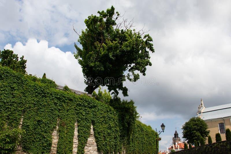 przeciw nieba drzewu zdjęcia stock