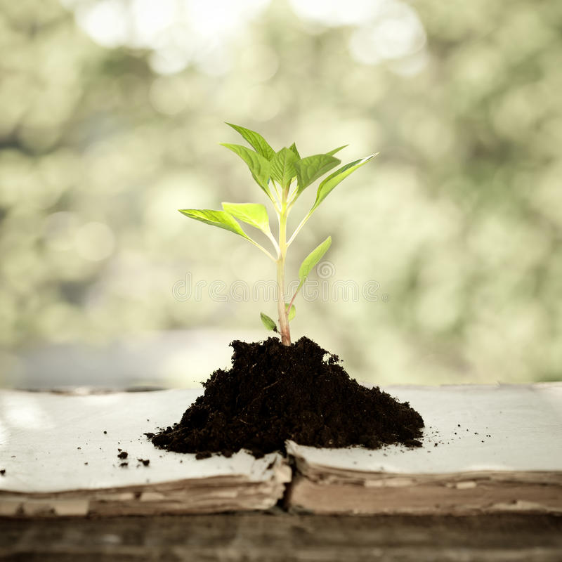 przeciw tła naturalnym rośliny potomstwom obrazy stock