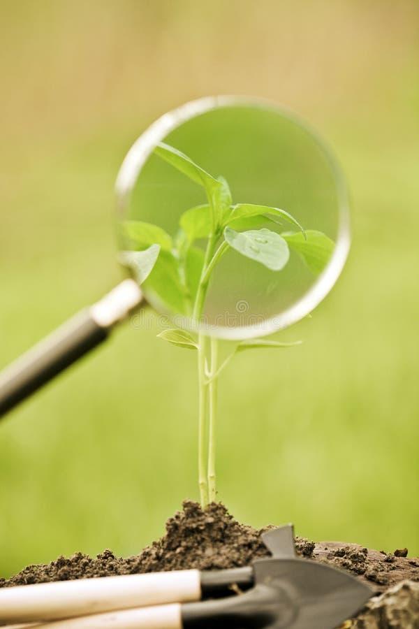 przeciw tła naturalnym rośliny wiosna potomstwom zdjęcie stock