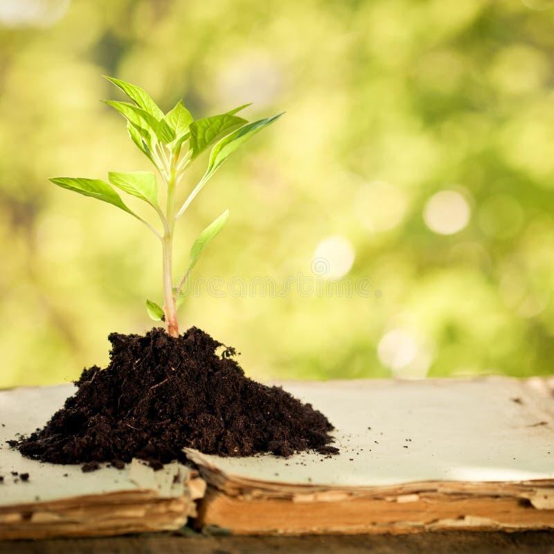 przeciw tła zieleni naturalnym rośliny potomstwom fotografia stock