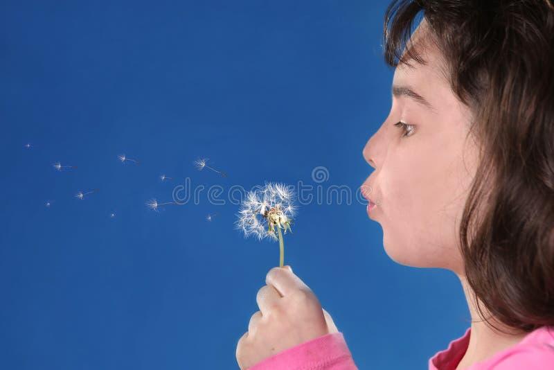 przeciw tłu target2594_1_ błękitny dziecka dandylions fotografia royalty free