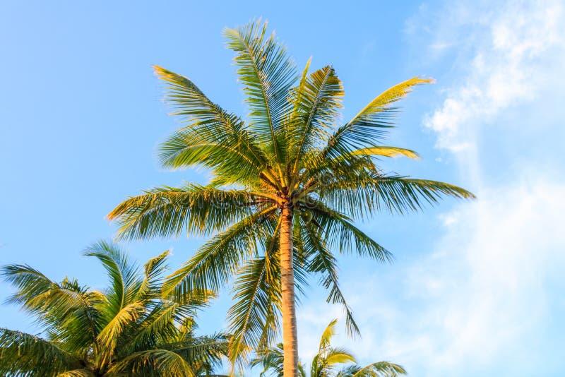 przeciwko b??kitnemu nieba palmowemu drzewo obraz royalty free