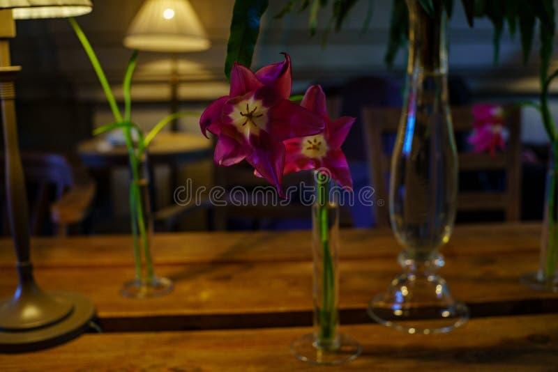 Przedmiot fotografia Drewniany stół z purpurowymi tulipanami w szkło długiej cienkiej wazie w wewnętrznego projekta kawiarni zdjęcia stock