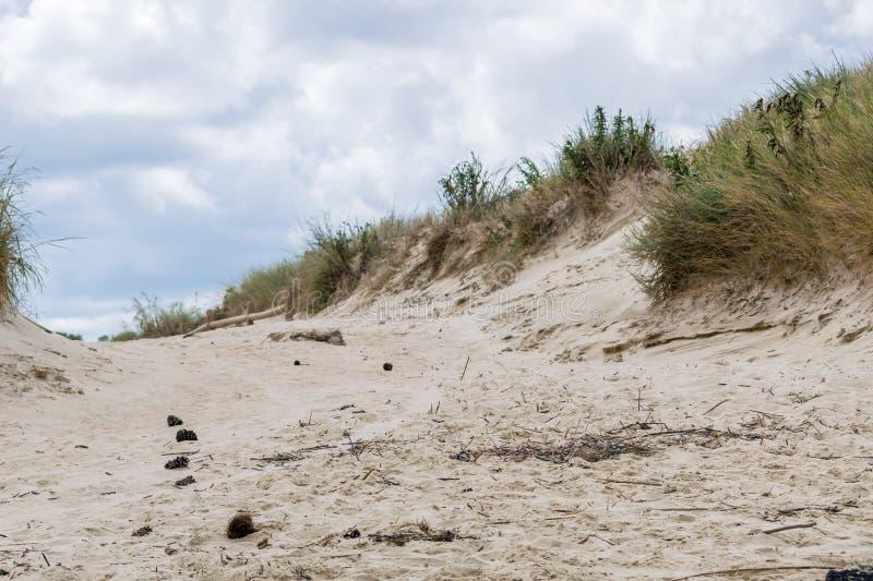 Przedpole skupiał się piasek diuny ścieżkę przy plażą fotografia royalty free