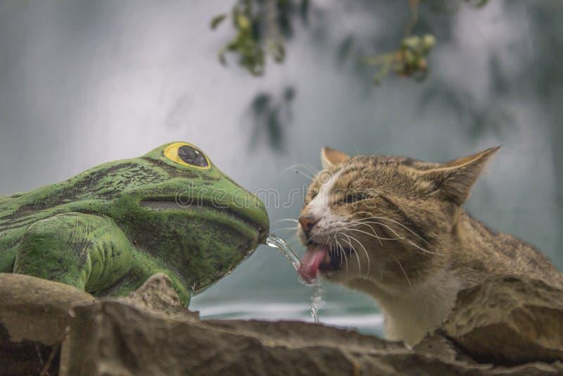 Przedsiębiorczy kot od Abrau Durso obrazy royalty free