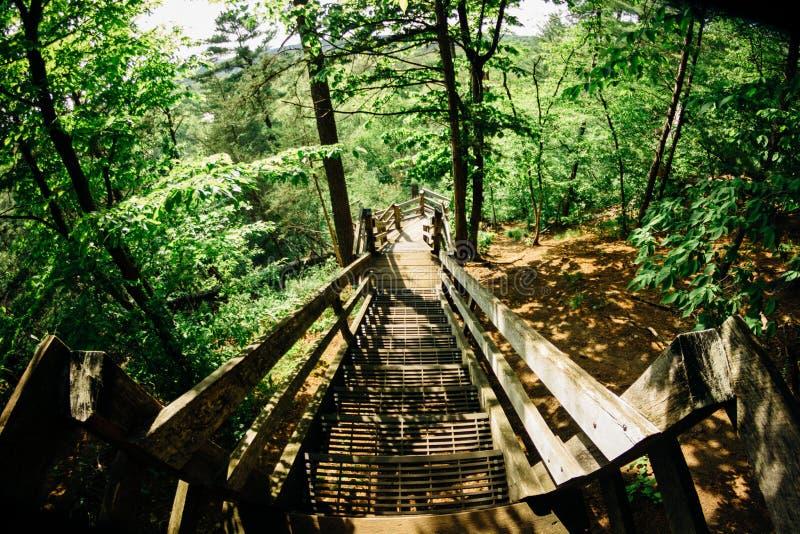 Przegapiać Wierzbowego Rzecznego stanu parka w Wisconsin 2 zdjęcia royalty free