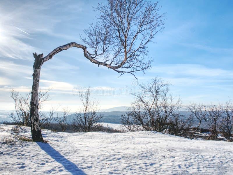 Przegięty samotny drzewo w sowy zimy landcape fotografia royalty free
