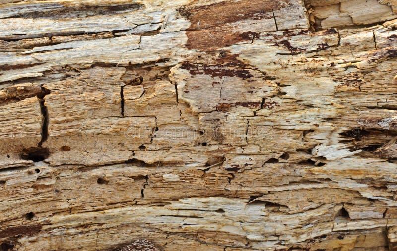 Przegniła drewniana tekstura obrazy stock