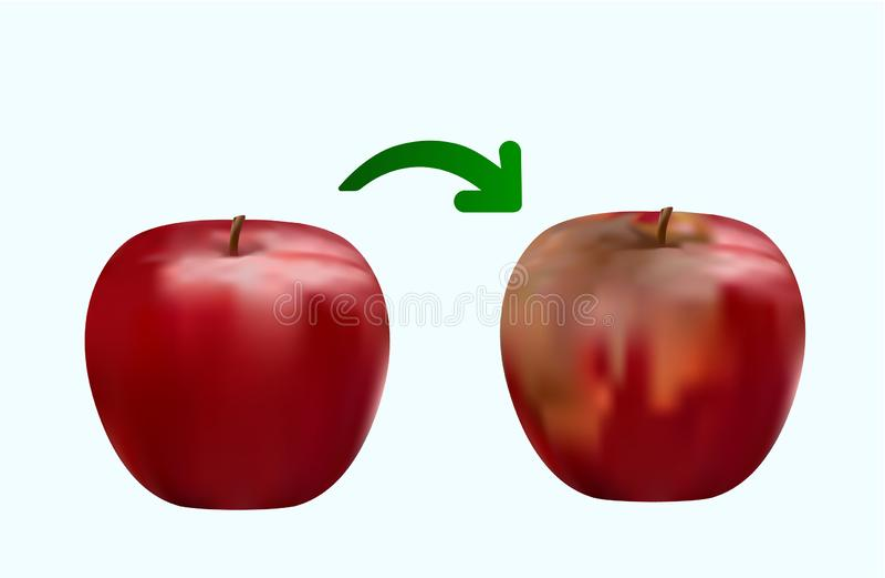 Przegniły czerwony jabłko, świeży czerwony jabłko, zbliżenie rysunek ilustracja wektor