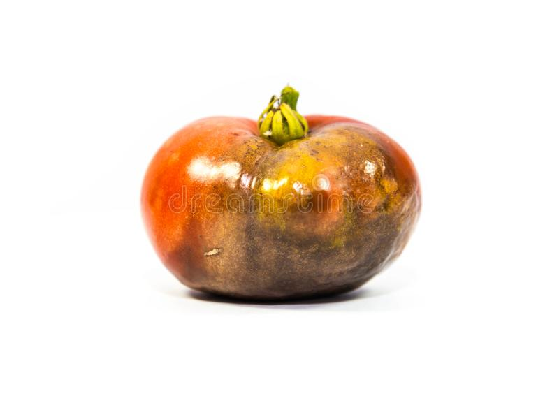 Przegniły przyrodni pomidoru zakończenie up strzelał, odizolowywał na bielu, obraz royalty free
