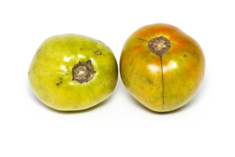 Przegnili pomidory po choroby od braka upał i światło pojedynczy białe tło Pomidor jest przegniły Pomidor fotografia royalty free