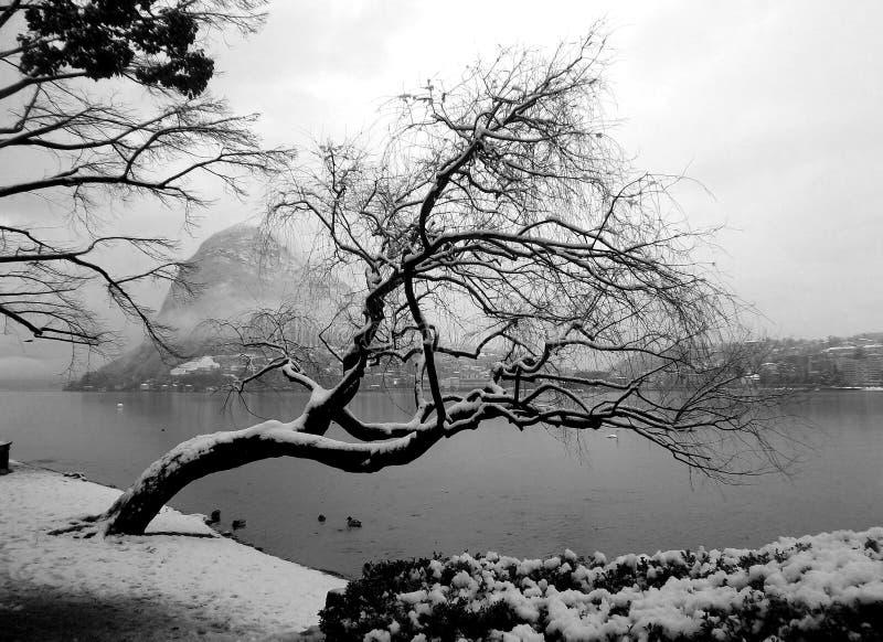 Przegrana zima drzewo obrazy royalty free
