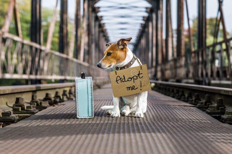 Przegrany i bezdomny porzucający pies obrazy royalty free