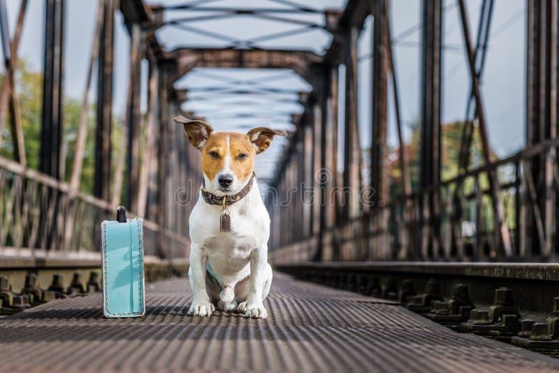 Przegrany i bezdomny porzucający pies fotografia stock
