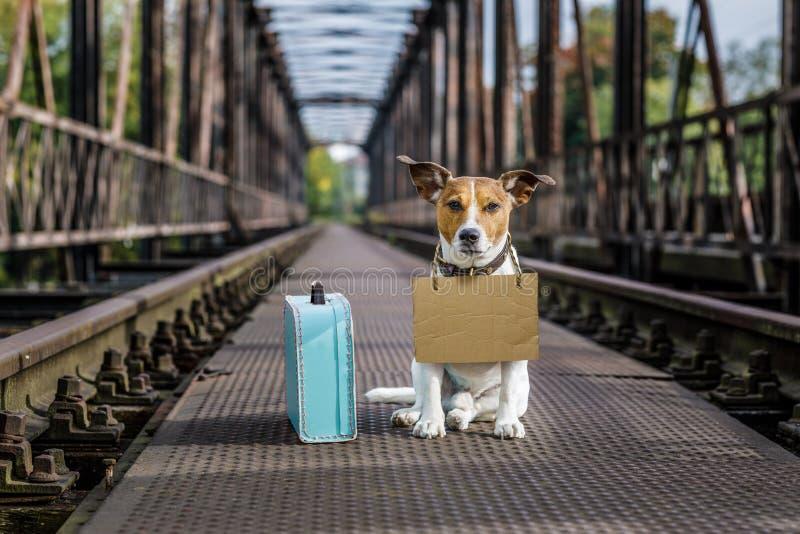 Przegrany i bezdomny porzucający pies obraz royalty free