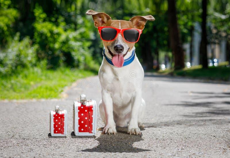 Przegrany i bezdomny porzucający pies zdjęcie stock