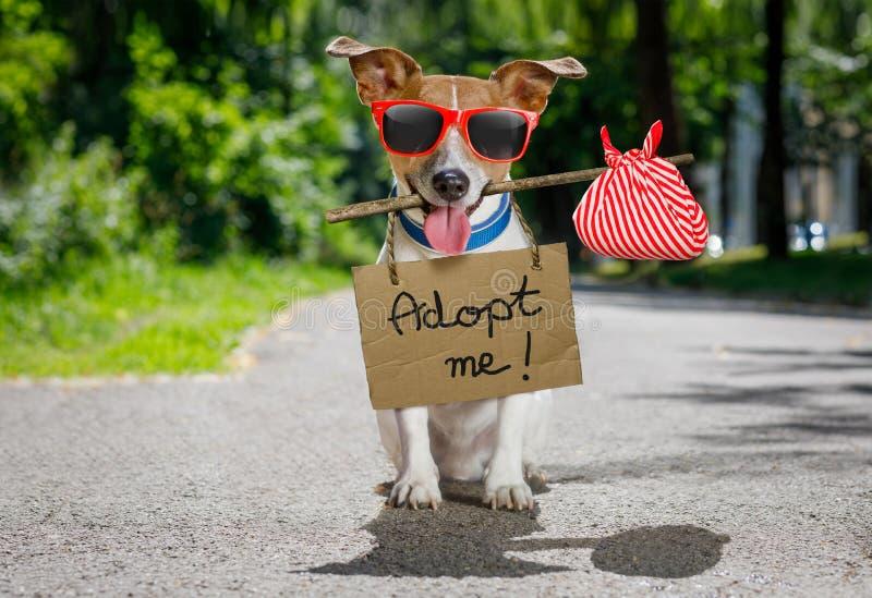 Przegrany i bezdomny porzucający pies fotografia royalty free