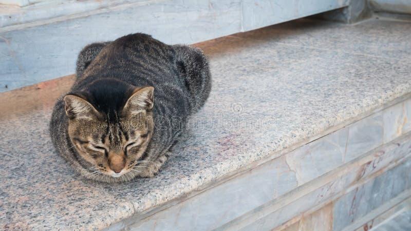 przegrany kot lub miejscowego kot w świątyni lub parku zdjęcie royalty free