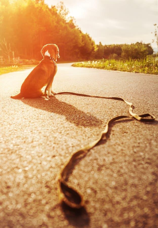Przegrany psi obsiadanie na drodze samotnie fotografia royalty free