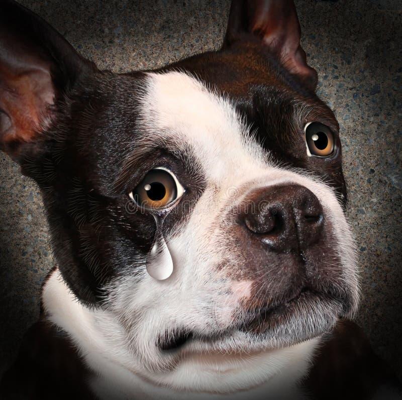 Przegrany zwierzę domowe ilustracja wektor
