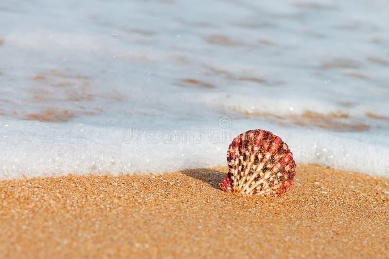 Przegrzebek Shell Na plaży obrazy stock