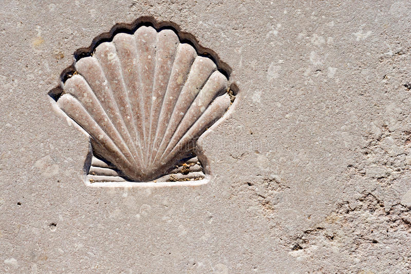 Przegrzebka Seashell - symbol pielgrzymka zdjęcia stock