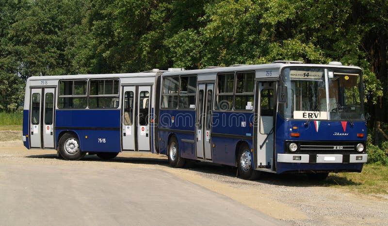 Przegubnego miasta autobusowy pozować obrazy royalty free