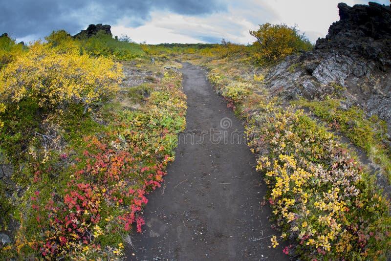 Przejście ścieżka przez różnorodnych rodzajów roślinność i krzaki zdjęcia royalty free